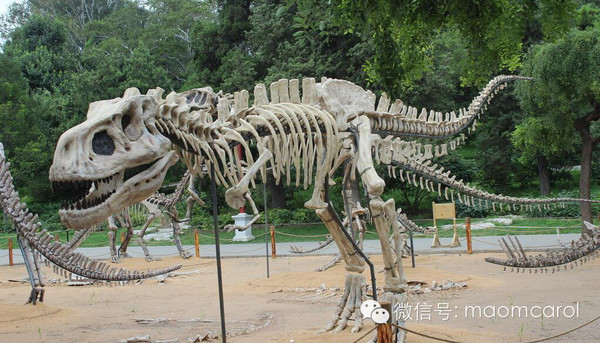 这些恐龙有关的电影、绘本送给资源荒的宝妈们 2