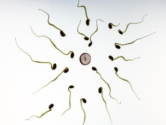 总结的一次成功受孕经验很有用!众宝妈亲测成功! 2