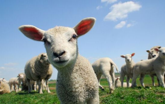 """恶意""""薅羊毛""""只是""""冰山一角"""""""